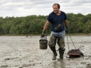 FILE -  In this Sept. 3, 2020 file photo, clamdigger Mike Soule hauls bags of clams on a sled across a mudflat in Freeport, Maine. More New Englanders have dug in the tidal mudflats during the last year, but they're finding fewer clams. The coronavirus pandemic has inspired more people in the Northeastern states to dig for the soft-shell clams. (AP Photo/Robert F.