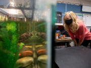 Katie Guehl, a fourth-grade teacher at Indian Run Elementary School in Dublin, Ohio, checks on Daphne Phyllis, a red-eared slider turtle, in her classroom.