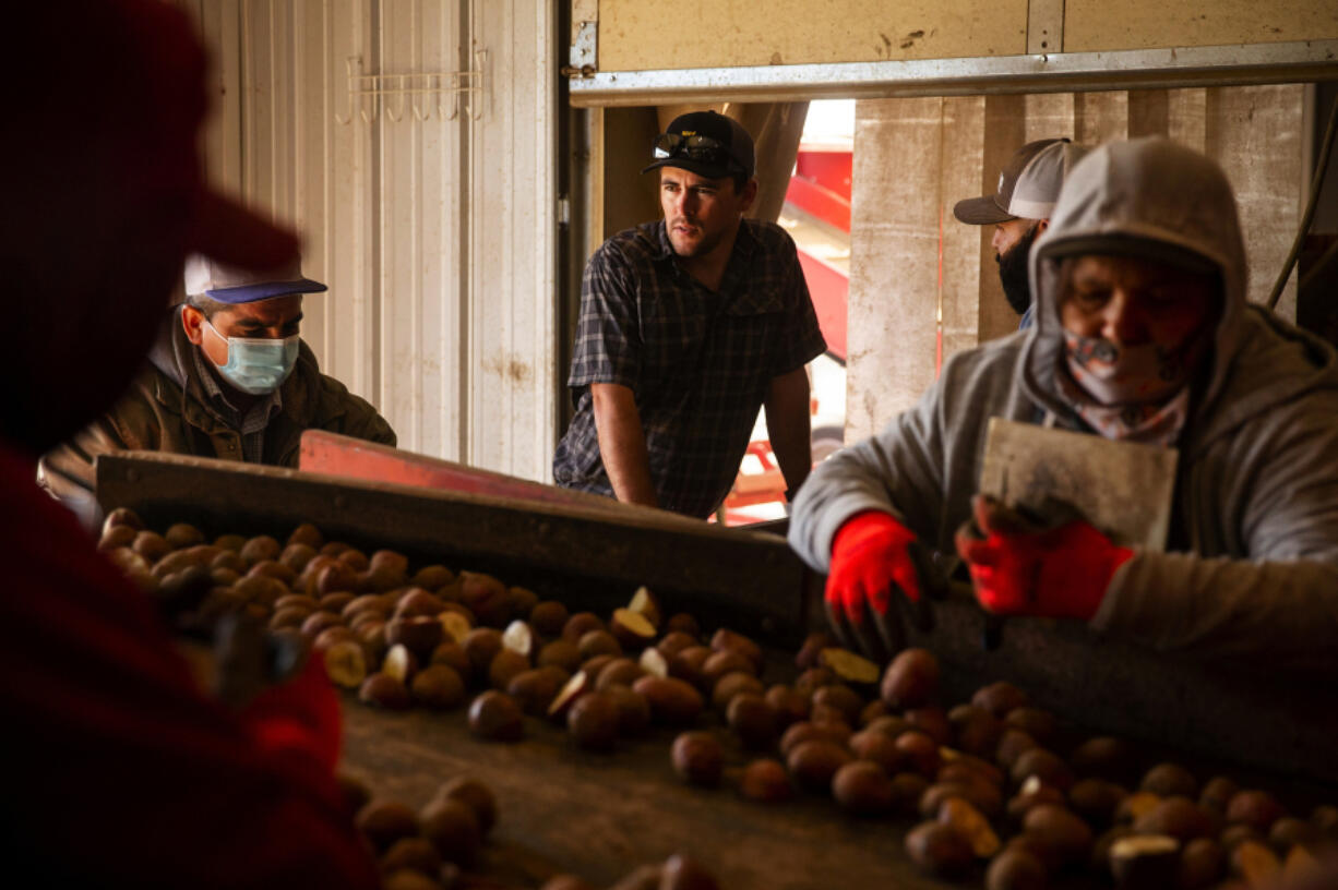 James Alford, center, watches as workers cut potatoes for his farm to plant on Wednesday, May 5, 2021. Alford's work force is entirely Latino. He doesn't oppose changing the electoral system, but explains the fear many farmers have of being regulated out of existence without representation on the county board.