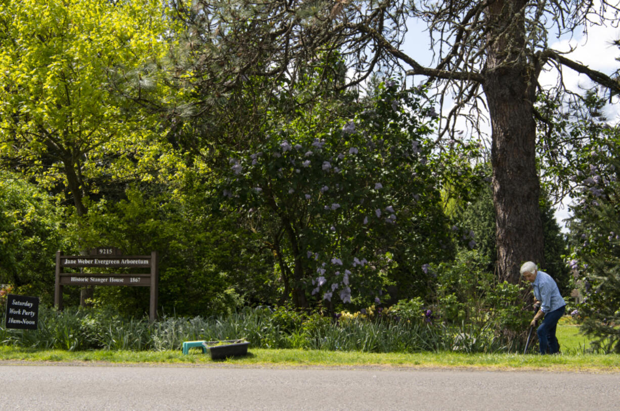 Volunteer Norma Williams tends to a garden near the entrance of the Jane Weber Evergreen Arboretum.