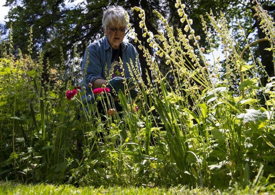Vancouver's Jane Weber Evergreen Arboretum beloved, 'magical'