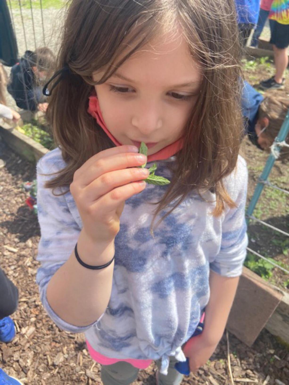 RIDGEFIELD: Annabel Berrian smells mint still growing from last year's garden.