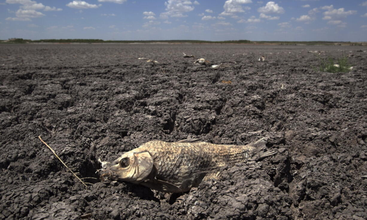 FILE - In this Wednesday, Aug. 3, 2011 file photo, the remains of a carp are seen on the dry lake bed of O.C. Fisher Lake in San Angelo, Texas. According to data released by the National Oceanic and Atmospheric Administration on Tuesday, May 4, 2021, the new United States normal is not just hotter, but wetter in the eastern and central parts of the nation and considerably drier in the West than just a decade earlier.
