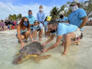 "Bette Zirkelbach, front left, and Richie Moretti, front right, manager and founder respectively of the Florida Keys-based Turtle Hospital, release ""Sparb,"" a sub-adult loggerhead sea turtle, April 22 at Sombrero Beach in Marathon, Fla."