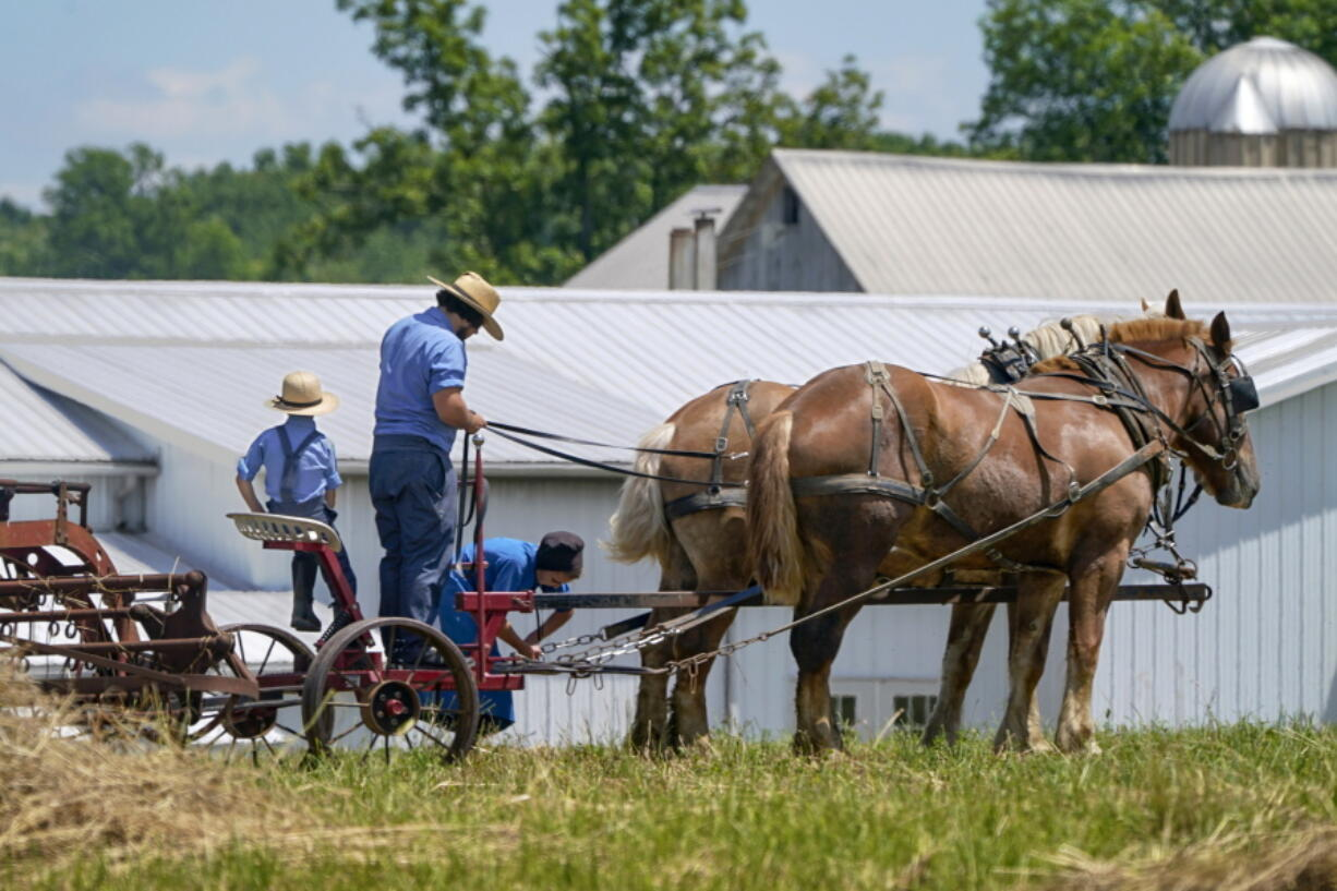 People in Amish country prepare a horse team to work on a farm in Pulaski, Pa., Wednesday, June 23, 2021. The vaccination drive is lagging far behind in many Amish communities across the U.S. following a wave of virus outbreaks that swept through their churches and homes during the past year.