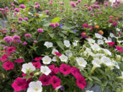 In the warm seasons these troughs in Columbus, Ga., are full of colorful flowers such as Truffula Pink gomphrena, Supertunias and Rockin salvia that attract hummingbirds and butterflies.
