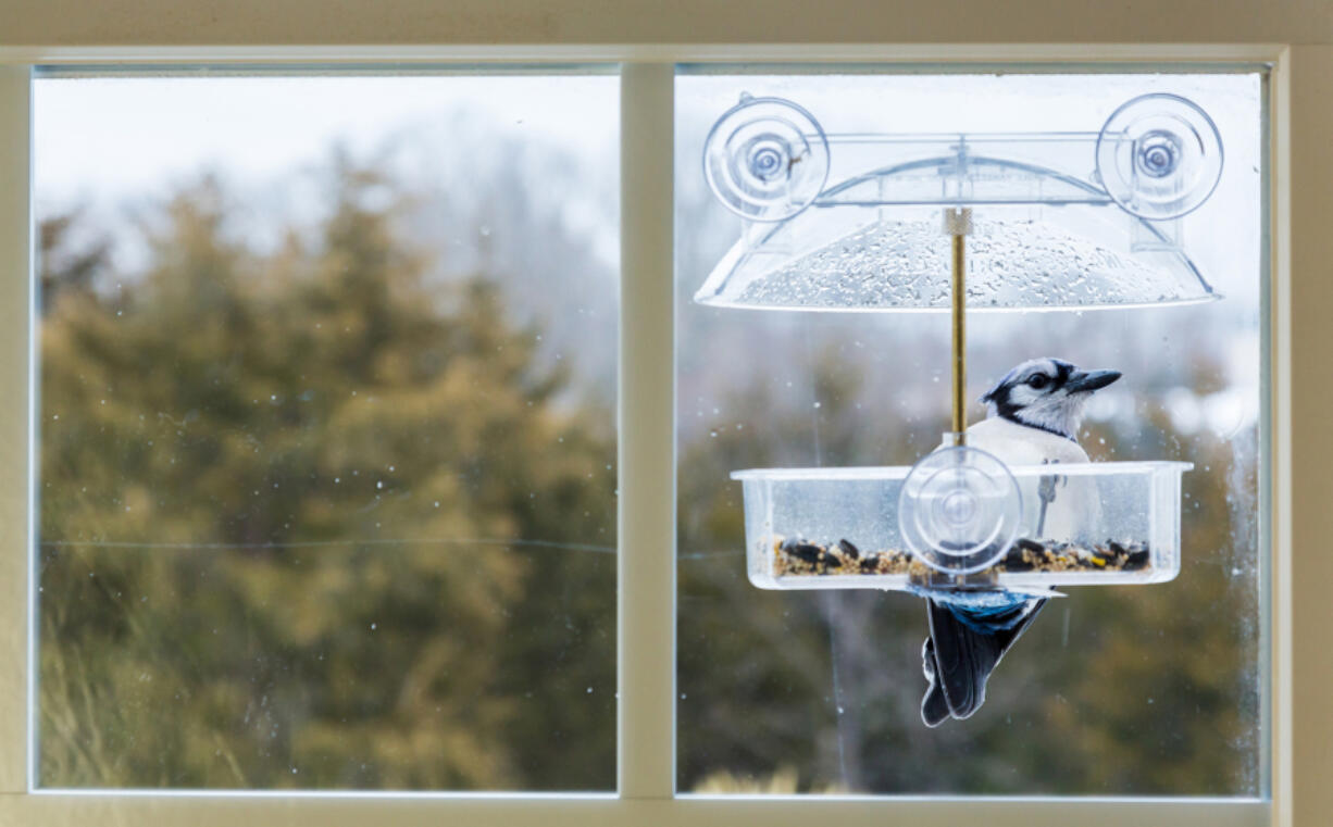 Bird watching and sales of bird food bird increased dramatically during the pandemic as more people worked from their homes.