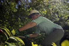 Volunteers rake forest floor near Trout Lake news photo gallery