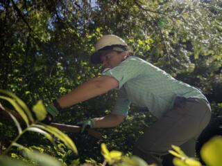 Volunteers rake forest floor near Trout Lake