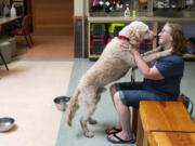 Jill Levesque greets Bo, her newly adopted goldendoodle, on Saturday during the first weekend of reopening to the public at the Humane Society for Southwest Washington in Vancouver.