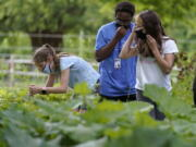 Jamil Boykin, center, camp educator at the Mass Audubon's Boston Nature Center and Wildlife Sanctuary, examines wild sorrel with students Nesha Moskowitz, left, and Lyla Mendoza, right, during a hike at the sanctuary, in the Mattapan neighborhood of Boston, Wednesday, June 23, 2021. Audubon Society chapters are grappling with how to address their namesake's legacy as the nation continues to reckon with its racist past. John James Audubon was a celebrated 19th century naturalist but also a slaveholder publicly opposed to abolition.