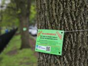 A sign hangs on an ash tree near that may be removed soon near Winnemac Park in Chicago, April 29, 2021. (Jose M.