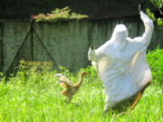 Bobbi Laderer, a bird intern at the Audubon Nature Institute's Species Survival Center in New Orleans, waves and runs to demonstrate alarm for Tornado, a 42-day-old endangered whooping crane chick, on Tuesday.