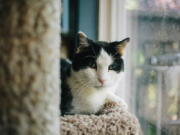 Orchards: Duncan was adopted from the Humane Society for Southwest Washington by Bob and Amy Libby in July 2017.