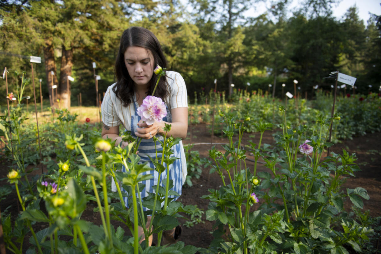 Jamie Smith of Jamie's Dahlias cuts flowers for arrangements each morning before the farm opens up to the public. She grew up in Portland and taught in Oregon City, Ore., before moving to Washougal. She left the teaching profession to pursue the dahlia business.