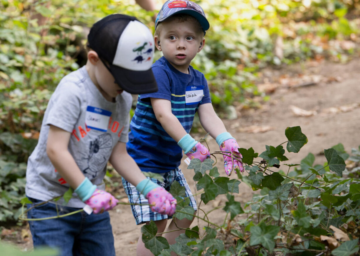 Samuel Hanson, 4, and Isaiah Hanson, 2, yank up ivy during a Saturday volunteer work party at Columbia Springs in east Vancouver. One dozen people helped pull ivy from trees and underbrush and lay bark on paths on Saturday morning.