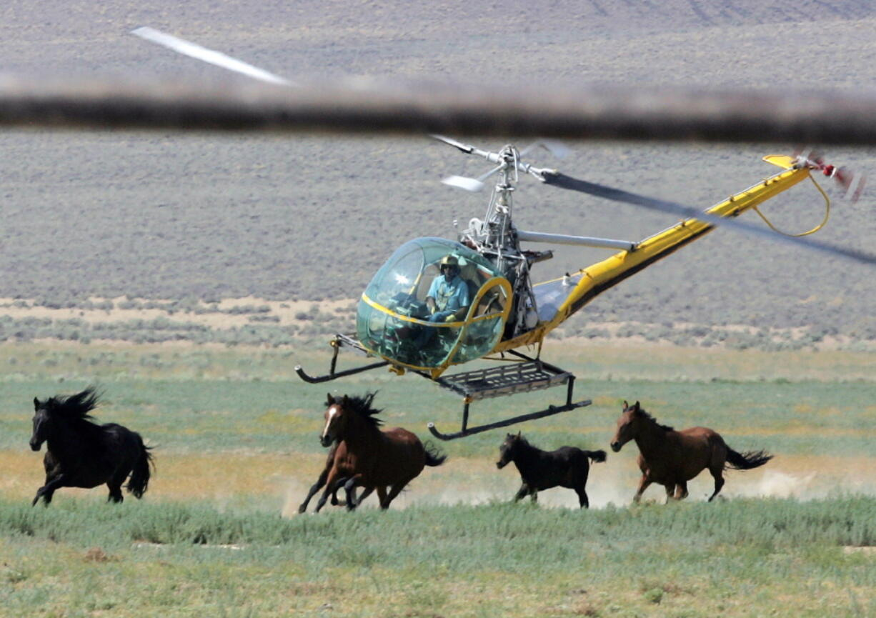 A livestock helicopter pilot rounds up wild horses from the Fox & Lake Herd Management Area in Washoe County, near the town of Empire, Nev., in July 2008.