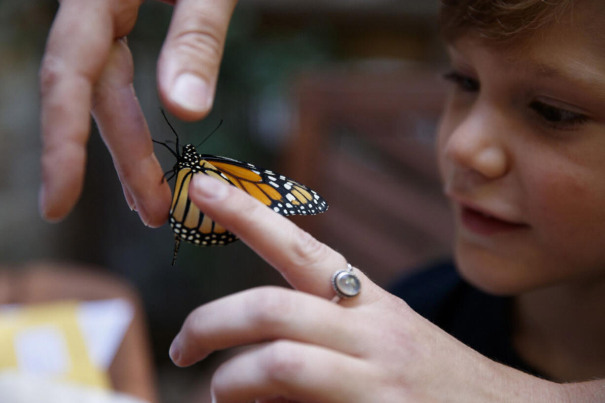 Samantha Goodman releases a monarch butterfly with her 6-year-old son Torben Goodman outside their home on Sept. 1 in Chicago. Four weeks ago Samantha collected the egg in a parkway in her neighborhood. (Armando L.