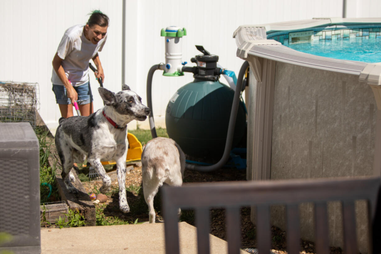 Danyel Whitbread is greeted by a customer's dogs, Capone, left, an Australian heeler mix, and Sage, an Australian shepherd, in St. Peters, Missouri on Saturday, August 14, 2021, while cleaning their backyard. (Daniel Shular/St.
