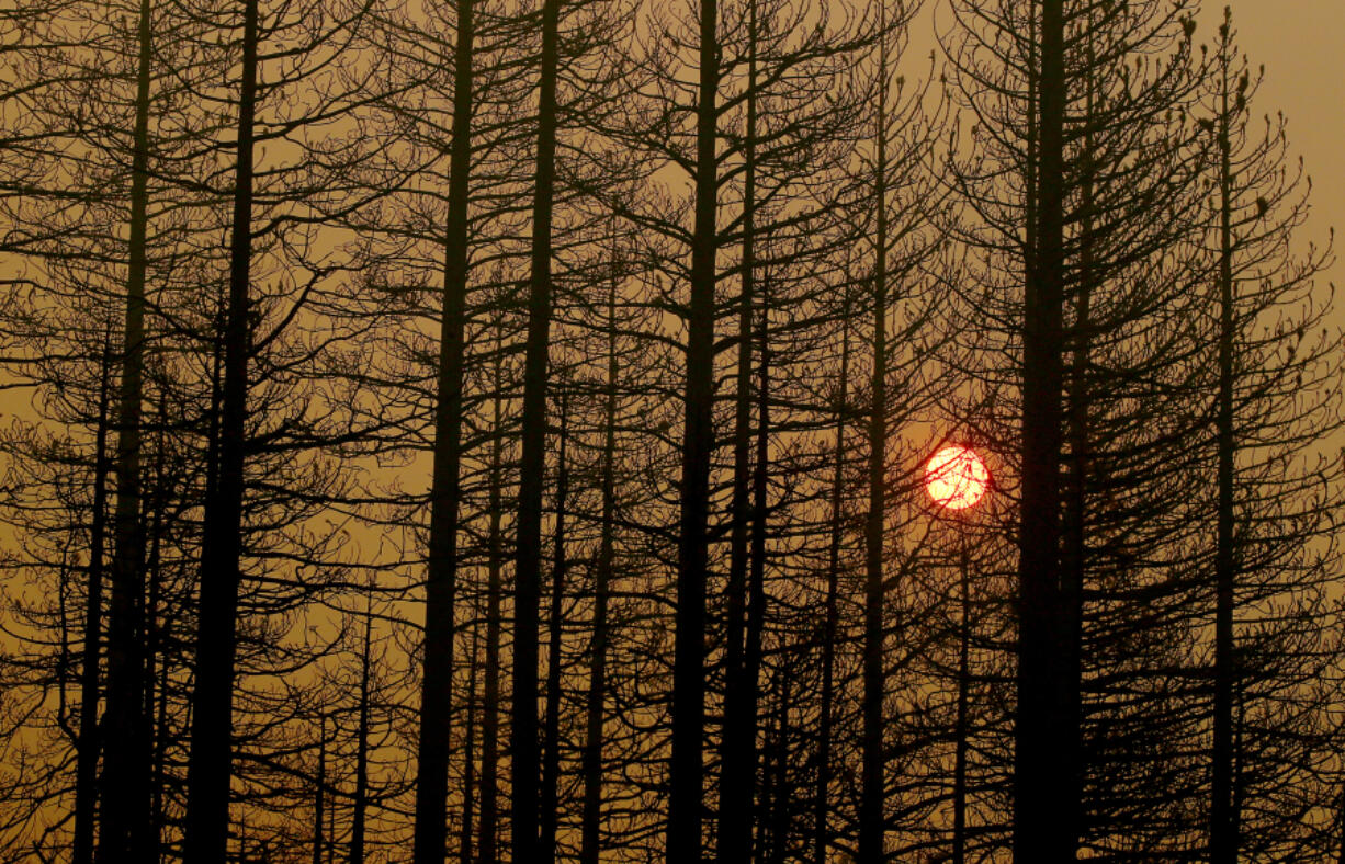 The setting sun is obscured by burned trees and a pall of smoke from the Dixie fire near Janesville. The blaze is the first wildfire in California history to burn from one side of the Sierra to the other.