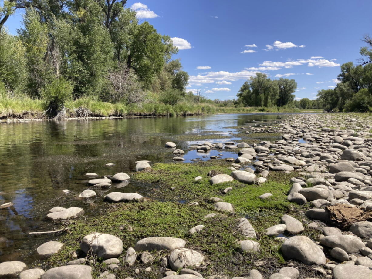 Exposed rocks and aquatic plants are seen alongside the North Platte River at Treasure Island in southern Wyoming, on Tuesday,Aug. 24, 2021.The upper North Platte is one of several renowned trout streams affected by climate change, which has brought both abnormally dry, and sometimes unusually wet, conditions to the western U.S.