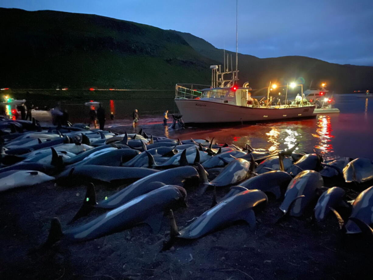 The carcasses of dead white-sided dolphins lay on a beach Sept. 12 after being pulled from the blood-stained water on the island of Eysturoy, which is part of the Faeroe Islands. The dolphins were part of a slaughter of 1,428 white-sided dolphins that is part of a four-century-old traditional drive of sea mammals into shallow water where they are killed for their meat and blubber. The hunt in the North Atlantic islands is not commercial and is authorized, but environmental activists claim it is cruel.