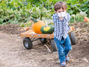 Pumpkin patches in Clark County are ready for fun in the fall.