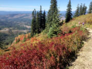 The colors on Silver Star Mountain are glowing now, but it's a bit of a hike to get there.