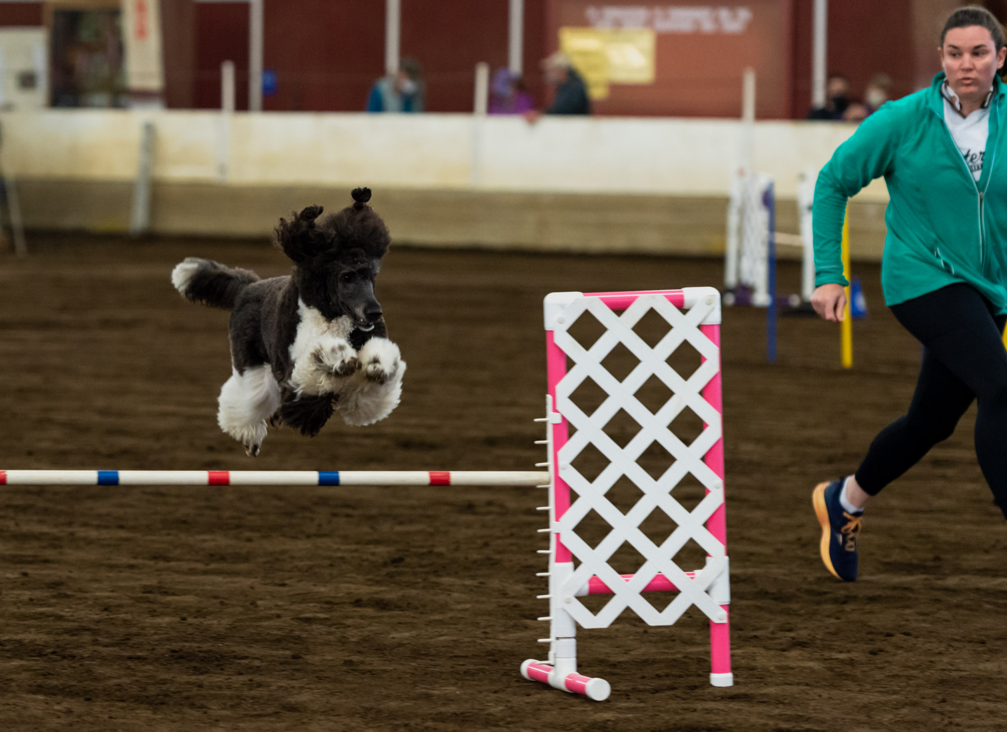Zena, a 2-year-old poodle, jumps over a hurdle while trainer Abi Kitchens runs alongside at the Mt. Hood Doberman Pinscher Club agility trials on Saturday, Oct. 9, 2021, at the Dr. Jack Giesy Equestrian Arena in Ridgefield.