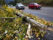 A broken tree rests on the side of the road Sunday, Oct. 24, 2021, near Snoqualmie, Wash., as a series of storms moved through the area.
