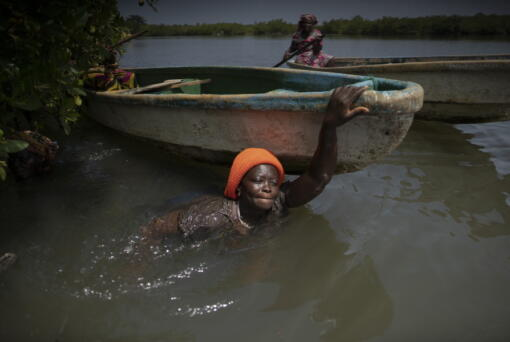 Rose Jatta pulls her boat into the estuary waters as she looks for fish traps she had set up earlier in the mangrove of the Gambia river in Serrekunda, Gambia, Saturday, Sept. 25, 2021. As health officials in Gambia and across Africa urge women to be vaccinated, they've confronted hesitancy among those of childbearing age. Although data on gender breakdown of vaccine distribution are lacking globally, experts see a growing number of women in Africa's poorest countries consistently missing out on vaccines. Jatta fears the vaccine against COVID-19 could make her ill, leaving her two children without food on the dinner table.
