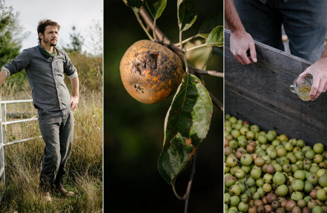 LEFT: Head cider maker Andrew Byers poses for a portrait at Finnriver Farm and Cidery in Chimacum, Washington on Friday, Oct. 1, 2021. CENTER: An apple with likely sunburn at Finnriver Farm and Cidery. According to Byers, there are too many variables to say for certain what harms or affects apple growths. RIGHT: Byers peers into a box of Perry pears while sipping some cider near the end of the day.